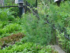 potager Iron Fence with Garden Garb SO FUN