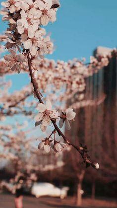 Wallpaper Nature Flowers, Beautiful Flowers Wallpapers, Flower Phone Wallpaper, Beautiful Nature Wallpaper, Scenery Wallpaper, Flowers Nature, Nature Photography Flowers, Aesthetic Photography Nature, Sunset Photography