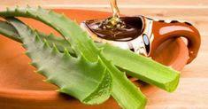 A babosa é uma planta que tem a capacidade de curar diversas doenças, de acordo com o que vem sendo comprovado. Diferentes estudos relatam que a babosa possui qualidades terapêuticas muito poderosas existem diversas formas