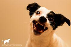 Gordi (Jack Russell Terrier, Unbekannt) Mischling Mix