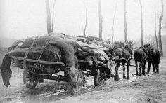 WWI, killed horses. -L'Attelage Français - Le Cheval et la guerre