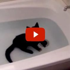 Crazy Cat Loves Water! - what a happy kitty