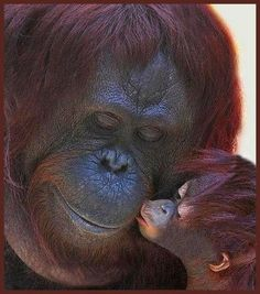 A Sweet Kiss For Mama...