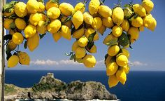 Amalfi lemon: nonnas kitchen always smelt of lemons