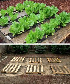 En jardinería y huertos urbanos el uso de palés es uno de los recursos más útiles y flexibles que podemos aplicar. Cómo ejemplo, este sencilla manera de crear mini huertas de vegetales con palés en horizontal, una forma de controlar perfectamente lo que cultivamos y ahorrar espacio. Vía One H…