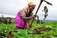 Gov't Not Showing Commitment To Developing Agric Sector  Journalists