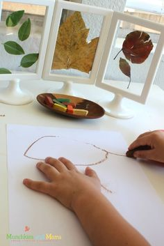 Ikea hack: Tolsby frames in the classroom and homeschool - great idea for studying leaves during fall!
