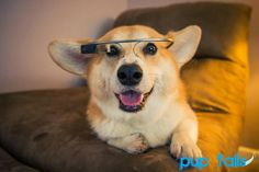 Check out this dog using Google glass!