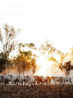 Road Trip / Cows / The Northern Territory / Australia Photographed / Kara Rosenlund Australian Photography, Farm Photography, Landscape Photography, Outback Australia, Australian Farm, Australia Landscape, Road Trip, Photo Wall Collage, Country Life