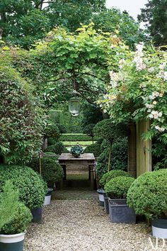 Vine-clad pergola in an English manor house's garden, Anouska Hempel Design
