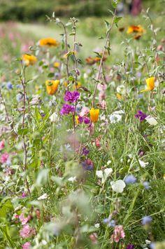 Jardim sueco. Jardim Rosendal. Muitas cores no jardim.