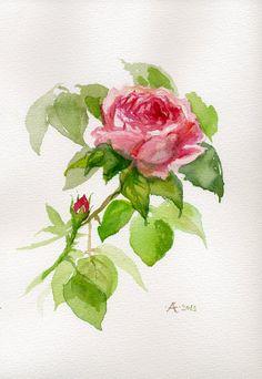 Pink Rose original watercolor painting, flower art gift, botanical illustration on Etsy, $51.68 CAD
