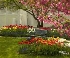 I would love a totally tulip backyard