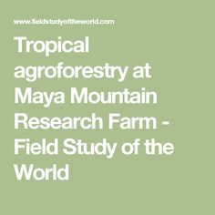 Tropical agroforestry at Maya Mountain Research Farm - Field Study of the World