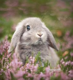 Animals And Pets, Funny Animals, Cute Baby Bunnies, Pet Rabbit, Cute Little Animals, Hamsters, Cute Animal Pictures, Animals Beautiful, Pet Birds
