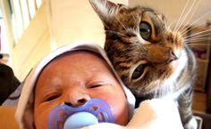 Her ne kadar kedilerin ve bebeklerin aynı ailede uyumlu bir şekilde var olabildiklerini bilsek de, yeni veya bekleyen anne ve babaların bebek ve kedicikler