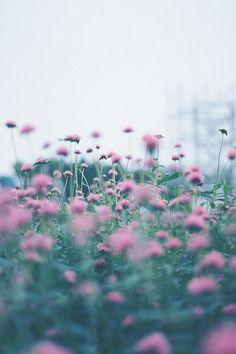 maarimessina:  Piccsy :: Photo on We Heart It - http://weheartit.com/entry/52032734/via/Maruuuuuu
