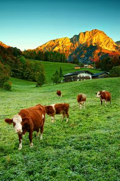 Berchtesgaden Land, Germany, by Christian Bothner