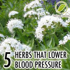 5 Herbs That Lower Blood Pressure