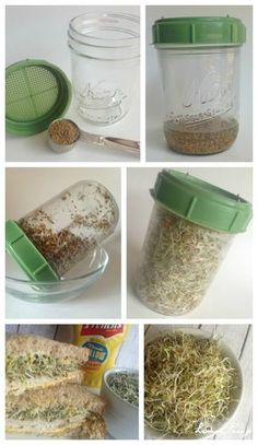 How to Grow Alfalfa Sprouts in 3 Days!