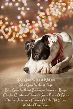 She came without ribbons. She came without tags.She came without packages, boxes or bags. Maybe Christmas doesn't come from a store. Maybe Christmas means a little bit more. Stop Animal Cruelty, Pet Life, Christmas Animals, Puppy Pictures, Dog Quotes, Beautiful Dogs, Pet Adoption, Animal Adoption, Mans Best Friend