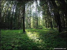 Blog:  Backpacking Untouched Forest