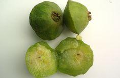 CAMBUCI um fruto bastante ácido que produz uma grande variedade de sub produtos - SP