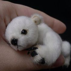 Baby polar bear. Ohh my goodness! This so cute!!