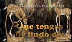 Amor Mio •ღೋεїз: Buen dia-bellas imagenes