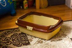 The Cat's Litter Smells like Ammonia - What to Do? - Litter-Boxes.com Litter Box Smell, Litter Pan, Enclosed Litter Box, Natural Cat Litter, Cat Pee Smell, Urine Odor, Urine Smells, Odor Eliminator
