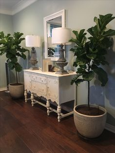 Southern Texas living room  by Bluebonnet Home. Oyster Bay by Sherwin Williams at 75% fiddle fig leaf trees in pots indoors. Chalk painted vintage buffet thrift store lamps makeover originally black cost $10.00