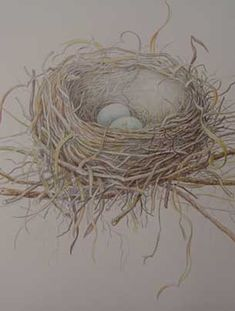 April Louise - Artwork and Botanical Sketches my colored pencil teacher's work - amazing!