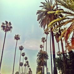 good morning, los angeles. So blessed to live and work in a place like this :)