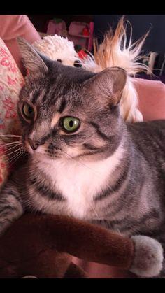 #cat #cats #kitten #kittens #cats #video #funny #cats  #cat #animal