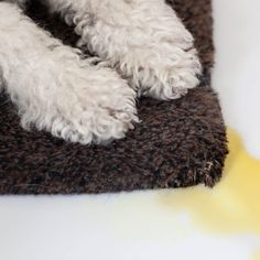 1000 Images About Cleaning Tips On Pinterest Dog Urine