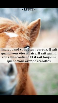 Citation cheval Citation cheval - Art Of Equitation Funny Horse Videos, Funny Horse Memes, Funny Horse Pictures, Funny Horses, Funny Quotes, Funny Memes, Memes Humor, Horse Quotes, Pretty Horses