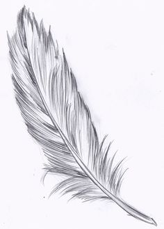 feather drawing - Hľadať Googlom