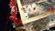 I just signed the petition to stop the possum drop at Shop For Your Cause. Please sign and help us make this change.