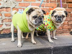 Izzy and Byron in their new dino fleece jackets