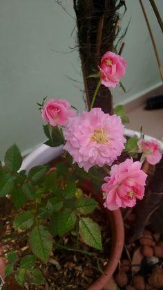 Flor rosa jardim