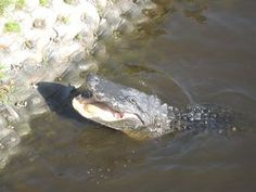 Myakka River State Park in Florida