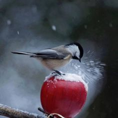 Cute Animal Photography by Granby, Canada based photographer Andre Villeneuve. Andre is an intuitive and spontaneous person, tries to convey emotions Kinds Of Birds, All Birds, Little Birds, Love Birds, Pretty Birds, Beautiful Birds, Beautiful Life, Photo Animaliere, Tier Fotos