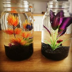 Cool fish tank idea. I especially love the orange plant against the dark colored beta. It really pops.