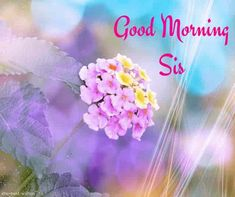 Looking for Good Morning Wishes for Sister? Start your day by sending these beautiful Images, Pictures, Quotes, Messages and Greetings to your Sis with Love. Good Morning Sister Images, Good Morning Happy Weekend, Good Night Sister, Love My Sister, Good Morning Gif, Good Morning Messages, Good Morning Greetings, Morning Pictures, Good Morning Wishes