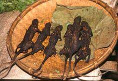 Jungle Market Rats at Tomohon Minahasa