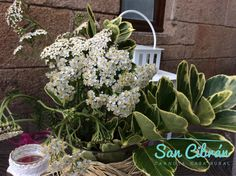 Una decoración perfecta con flores silvestres.  #cottage #casarural #travel #decoracion #sancibranrural