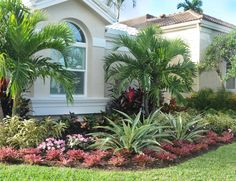 Adonidia landscape there is a member comment about this for Florida landscaping ideas for front yard