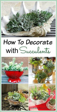 How to decorate with succulents. There are so many different shapes, sizes and colors of succulents that it's easy to make a beautiful and unique succulent garden! Here are some pretty INDOOR SUCCULENT CONTAINER IDEAS to inspire you! Diy Garden, Garden Projects, Garden Plants, House Plants, Garden Landscaping, Garden Beds, Porch Plants, Gravel Garden, Garden Care