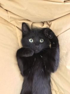 Black cat struck by a sudden thought. and like OMG! get some yourself some pawtastic adorable cat shirts, cat socks, and other cat apparel by tapping the pin!