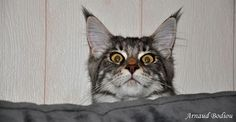 """""""Did I hear the crinkle of the treats bag???"""" Every time!"""